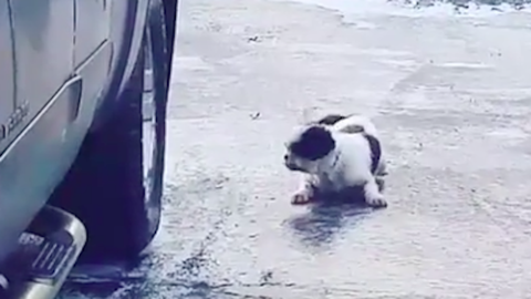Nagyon nem boldogul a jeges úton a kiskutya – cuki videó