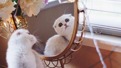Mindenki imádja az állandóan kétségbeesett cicát