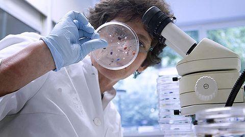 Hattyúkat ölt a madárinfluenza Erdélyben