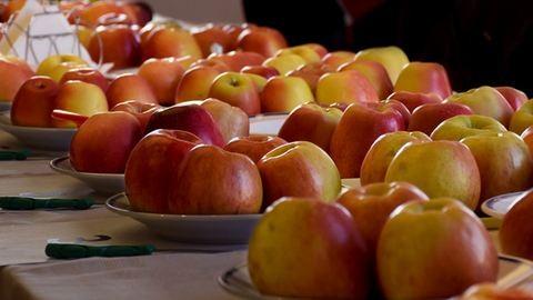 15 új magyar almafajta mutatkozott be