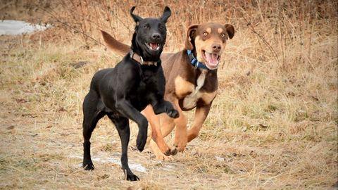 Fogd meg a pórázt, és segíts! – önkénteskedtem az etyeki kutyamenhelyen