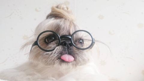 Ennek a kutyának olyan sérója van, amiről te csak álmodozol
