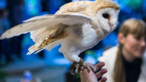 Kvíz! Kitalálod, hogy melyik Harry Potter-szereplőhöz melyik állat illik?