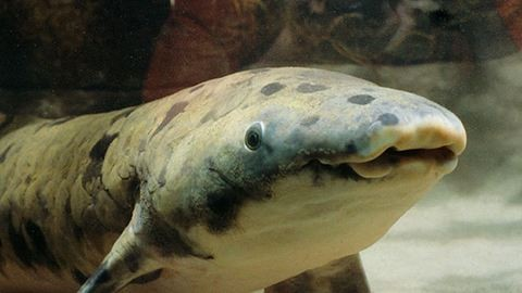 Elaltatták Nagyapát, az akvárium 80 éves lakóját