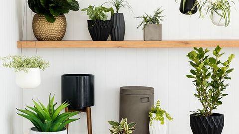5+1 tipp: így tartsd életben a szobanövényed