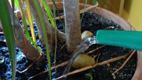 Milyen gyakran öntözzük a növényeket télen?