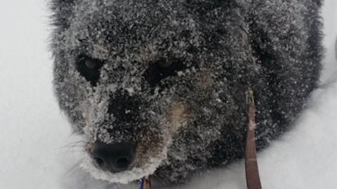 A behavazott kutyusok cuki fotói segítenek, hogy elviseld a maradék telet