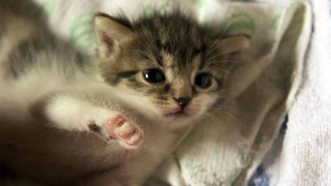 Állatmentők szabadították ki az extrém helyre született cicákat