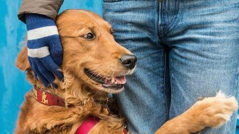 Ismerd meg a kutyust, aki bárkit megölel, akinek szüksége van rá