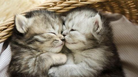 Állati csókok – elképesztően cuki fotók