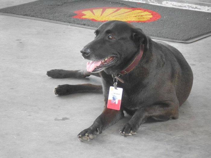 Benzinkúton kapott állást az elhagyott kutya
