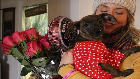 Mentett kiskutyák kézbesítették a Valentin-napi ajándékokat – cuki fotók