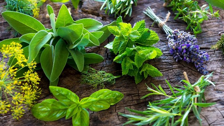 Főzz gyógyító növényekkel!