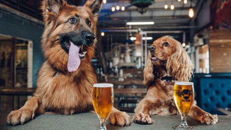 Egy hét szabadságot ad egy skót sörgyár a friss gazdiknak
