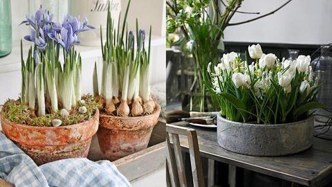 Télűző virágos ötletek otthonodba