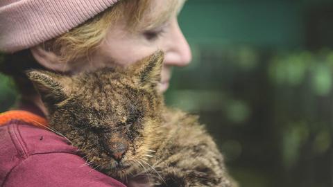 Megölelte megmentőjét a cica, akihez senki sem mert hozzáérni