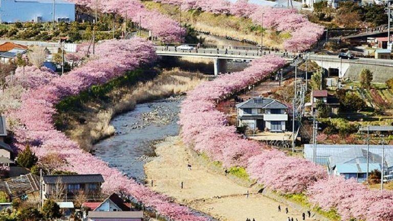 Ebben a japán városban máris kezdetét vette a tavaszi cseresznyevirágzás – csodás fotók
