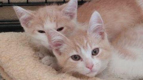 Tinderen jöttek össze, majd kiderült, hogy a macskáik elveszett testvérek