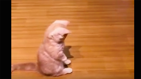 Teljesen rákattant az árnyékára a cuki cica – vicces videó