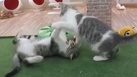 Itt nézhetsz cuki cicákat élőben, 0-24-ben!