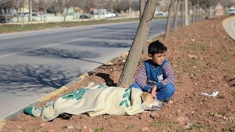 Menekült kisfiú segített a bajba jutott kóbor kutyán