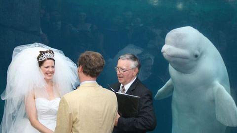 Photoshop-párbajt indított az esküvőt megzavaró delfin