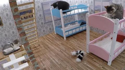 A kiscicákkal készült valóságshow jobb, mint az összes tévés reality, amit eddig láttál