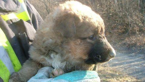 Szakadékba esett kiskutyát mentettek a komáromi tűzoltók