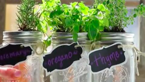 Így lehet neked is házi fűszernövénykerted befőttesüvegből