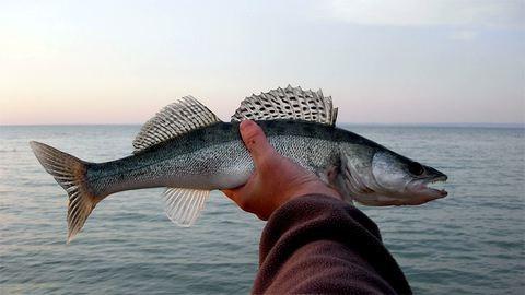 Mától tilos kifognod ezeket a halakat