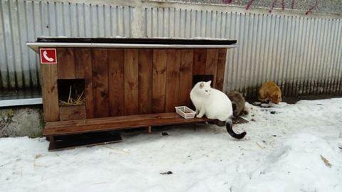 Apró házakkal segítenek a hidegben kóborló macskáknak