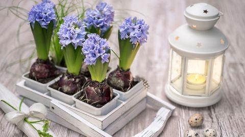 Jácint, tulipán, orchidea: így borítsd virágba az otthonod