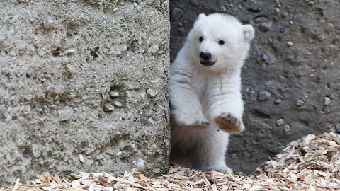 Ünnepeld a pénteket kacsintós jegesmedvével!