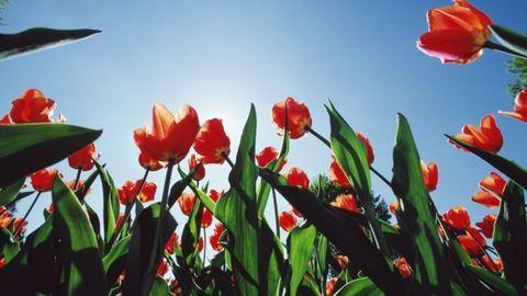 Jó hírt hozhat a tavasz az autósoknak