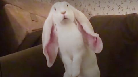 Ismerjétek meg Lucast, a világ legőrültebb nyusziját – videó