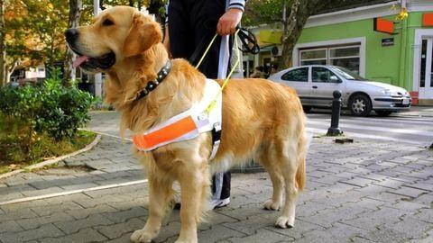 Vakvezető kutyával gyakorolnak a komáromi tűzoltók