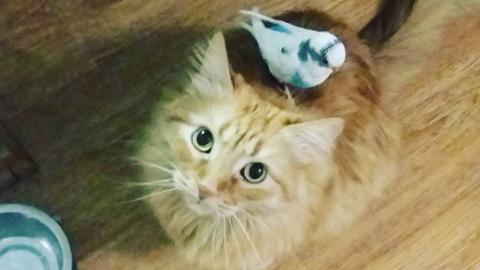 Mindent együtt csinál a cica és a kismadár – cuki fotók