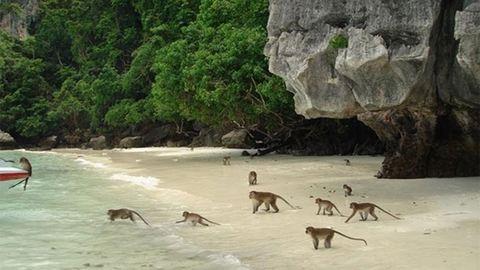 Álmaid úti célja lesz a majmoktól hemzsegő tengerpart