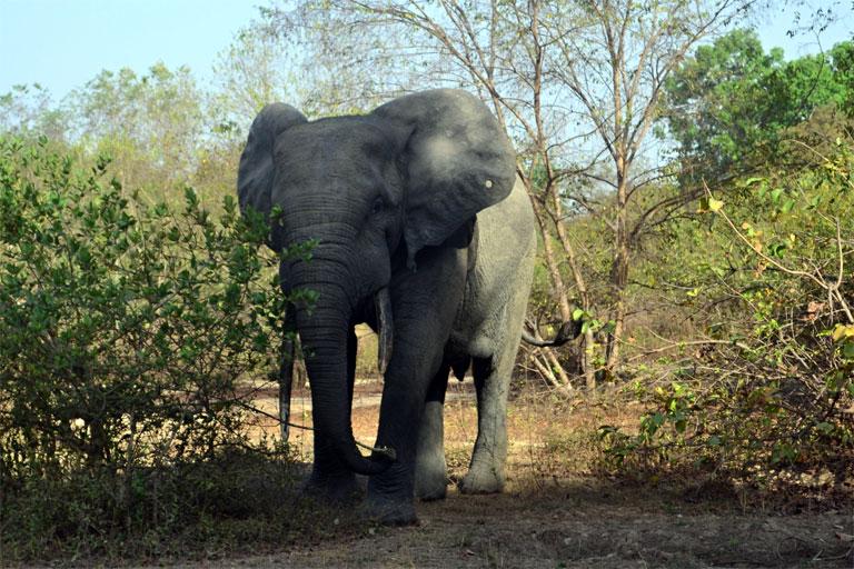 A legközelebbi találkozás egy barátságos ghánai elefánttal (Fotó: http://zsuzsiestekergo.blog.hu/)