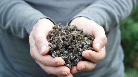Tömegével irtotta ki a méheket a kemény fagy