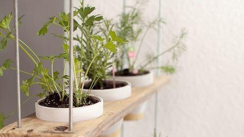 Neked is lehet ilyen menő függő-füszernövénykerted a konyhádban!