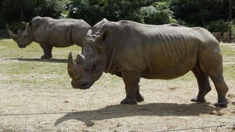 Párizsi állatkertben lőttek agyon egy orrszarvút