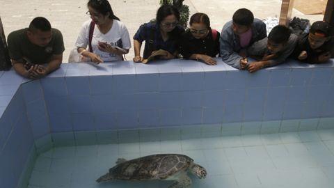 Félkilós fémtömb lett a teknős hasában a lenyelt pénzérméktől