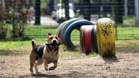 Kolbásszal mérgezi valaki a pesti kutyákat