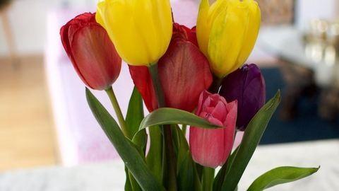 Ezzel a trükkel egy hétig is frissen tarthatod a tulipánt