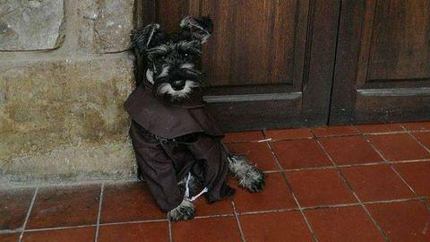 Netes szenzáció lett a kutya, akit szerzetesek fogadtak örökbe