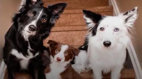 Kistesót kapott az internet kedvenc ölelkező kutyapárja - cuki videó