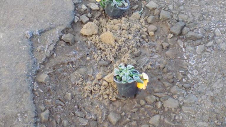 Virágokkal ültették be a kátyúkat egy berceli utcában – fotók