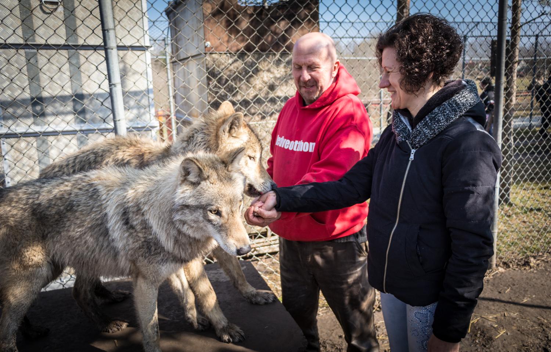 Testközelből ismerkedhetett a farkasokkal öt látássérült fiatal