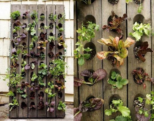 10 ötlet, hogy csinálj kertet az erkélyedből